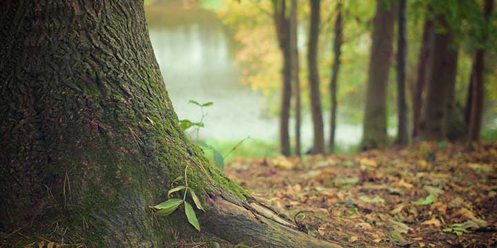 fulvic-and-humic-acids-benefit-trees-in-north-texas