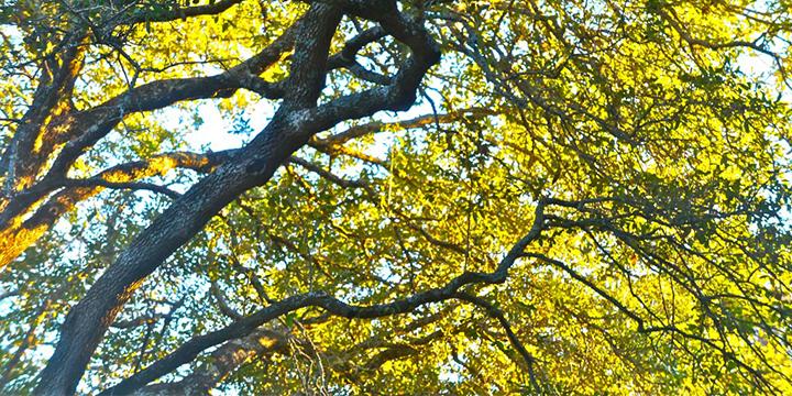 spring_tree_care