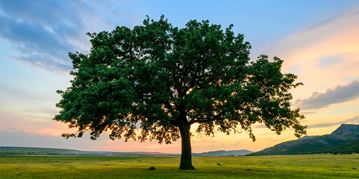 shade_trees_for_north_texas