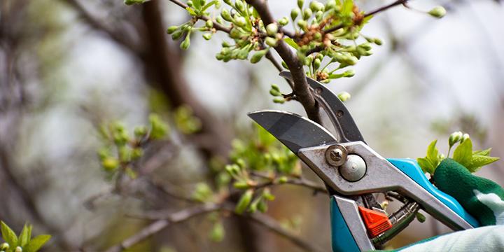 tree_trim