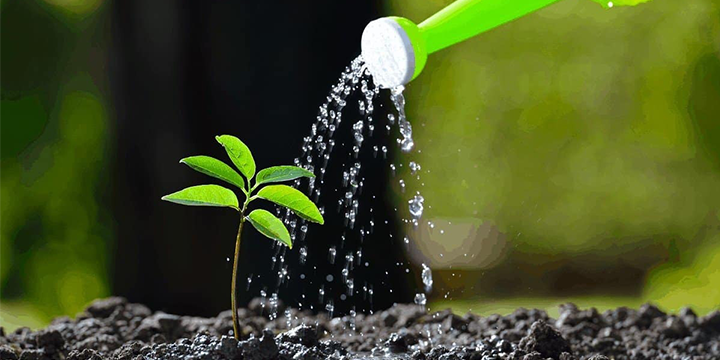 tree_watering