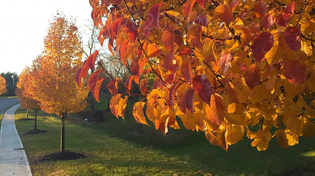 tree-nurturing-blog