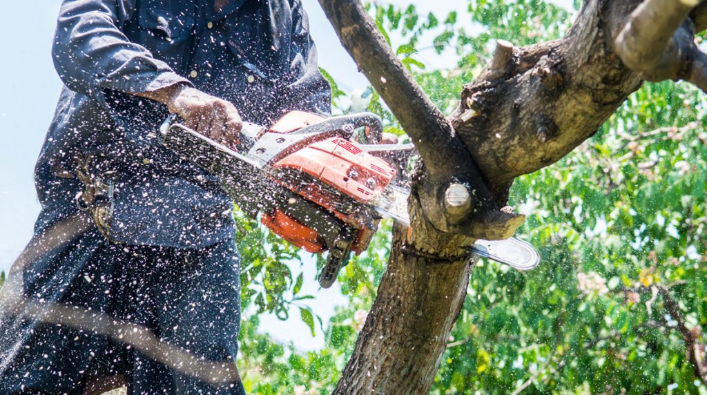 tree-trimming-homeowners-blog
