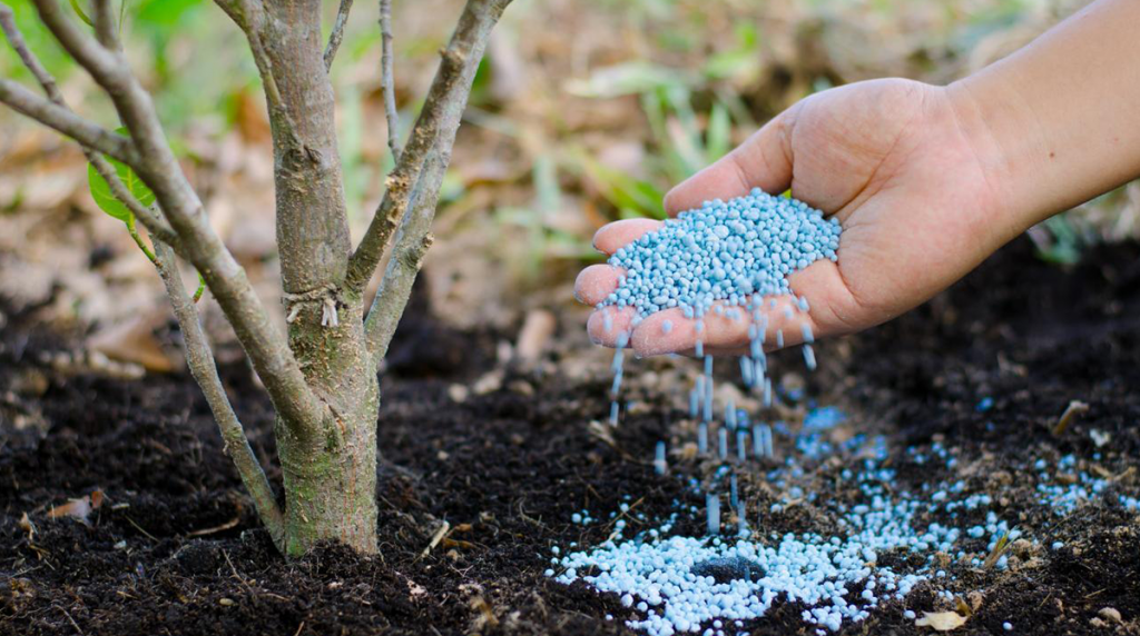 tree-fertilizer-blog