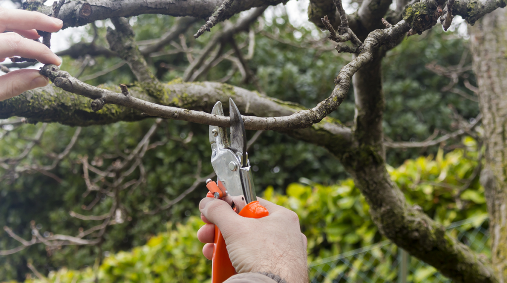 tree-trimming-pruning-blog