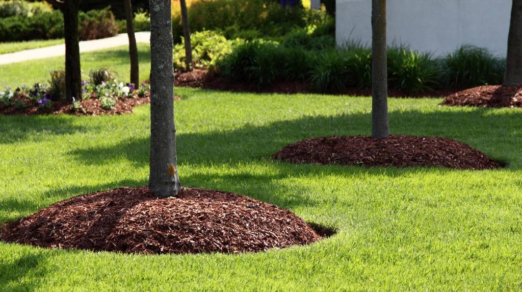 tree-mulch-blog