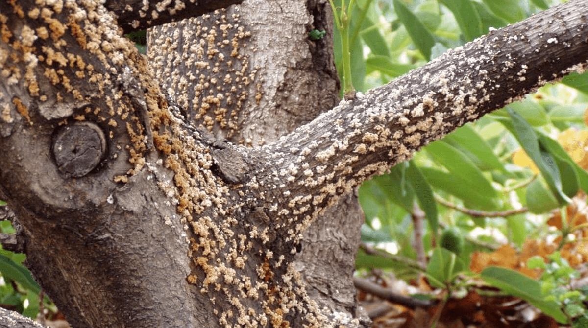 deadly-hardwood-tree-disease