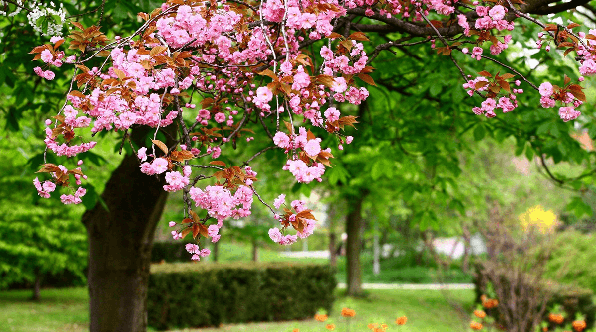 spring-treecare-checklist