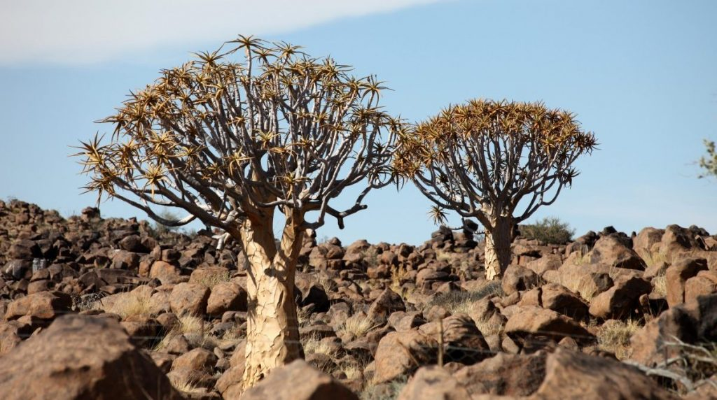 Drought-on-Landscape-Trees